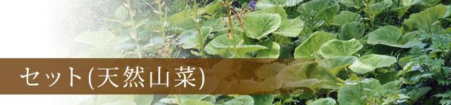 セット 天然山菜