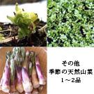 天然山菜 お試しセット(4月初旬)