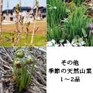 天然山菜 お試しセット(4月中旬)