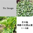 天然山菜 お試しセット(4月下旬)
