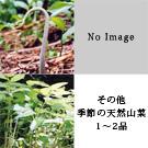 天然山菜 お試しセット(5月)